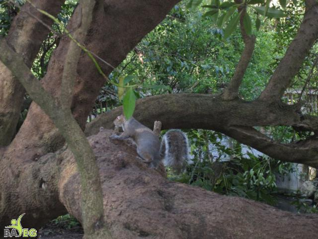It's harder than you think to photograph a squirrel in Golden Gate Park