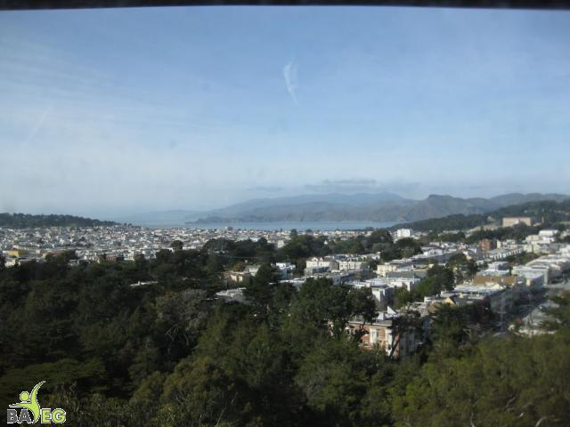View from the tower at Golden Gate Park