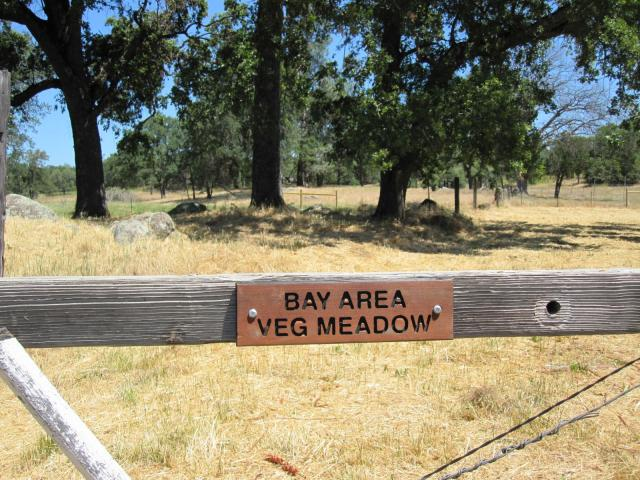 Bay Area Veg Meadow - picnic area at Animal Place, Grass Valley