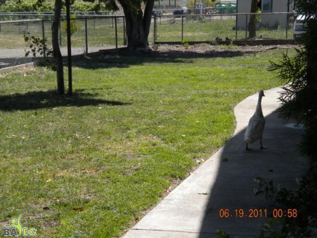 Taking a stroll around Harvest Home.