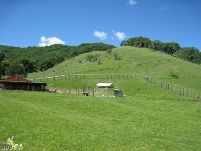 Beautiful green pastures at Animal Place