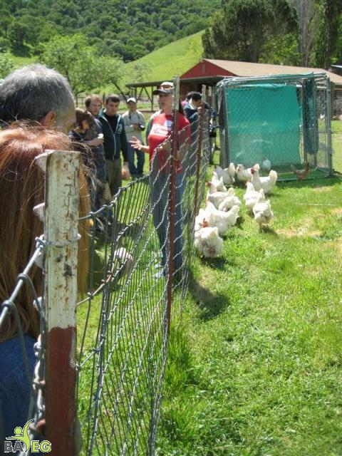 Chickens and Humans, interest on both sides